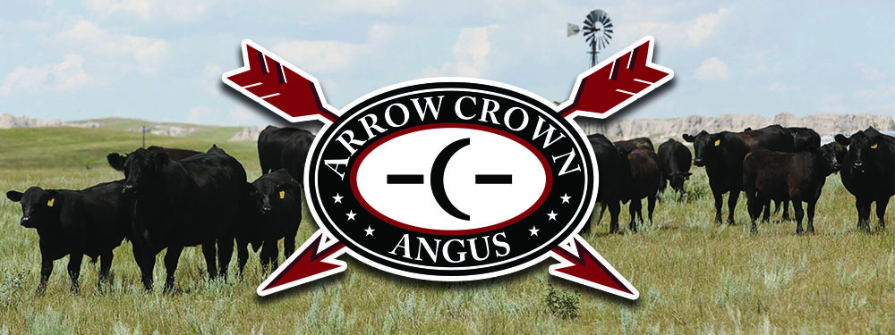 Arrow Crown Angus